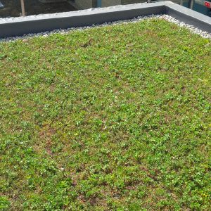 10. Green Roofs