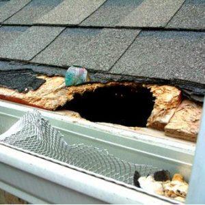 animal damage roofing service toronto